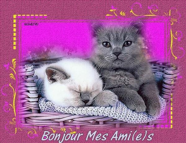 Bonjour du jeudi 03/04/2014 9ad39b15-44dbad7
